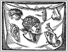 Aristotle's five senses