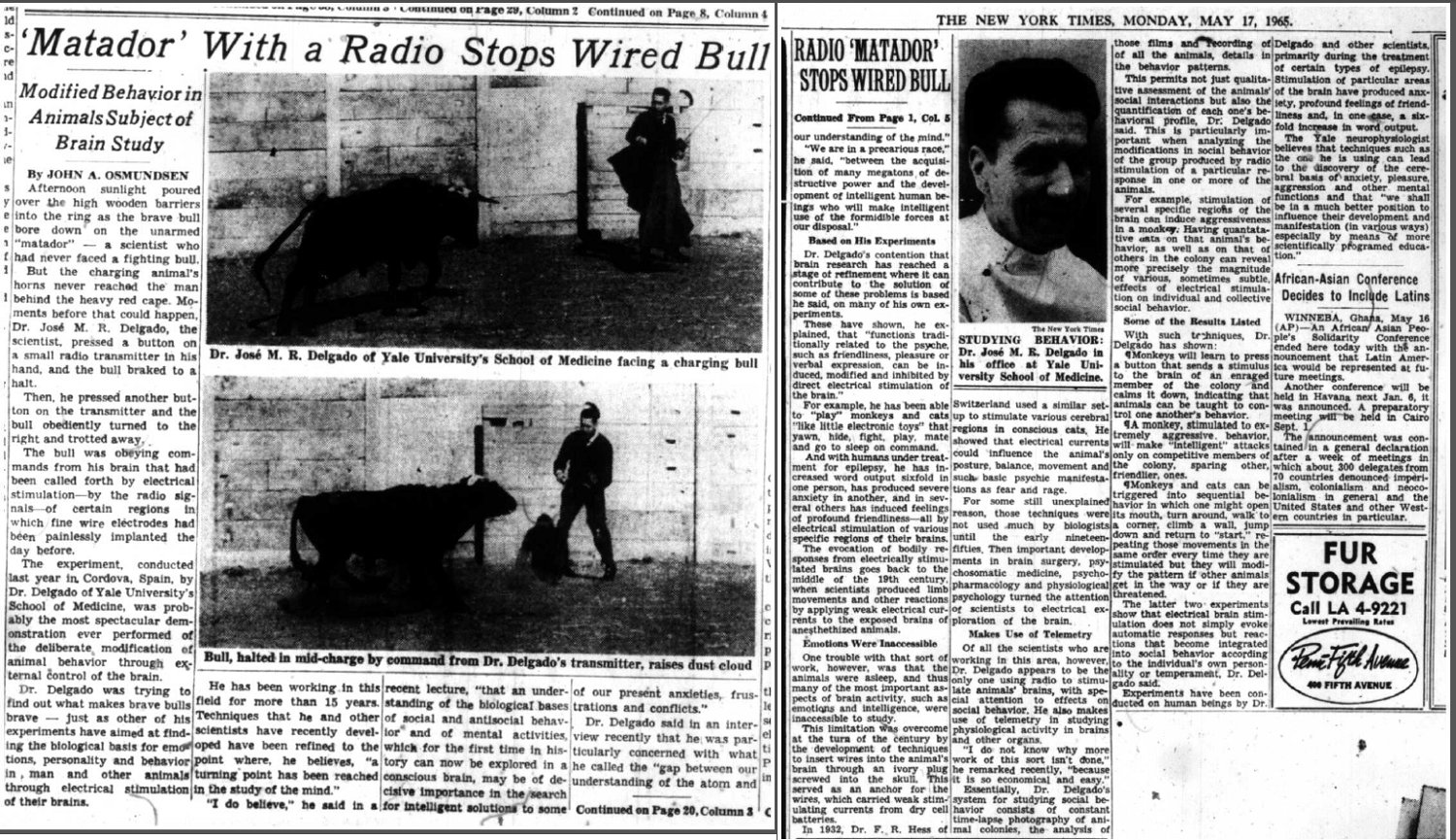 John A. Osmundsen, 'Matador' With a Radio Stops Wired Bull, The New York Times, 17 May 1965